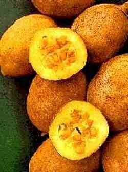 Jenipapo - O jenipapo é uma árvore da família das rubiáceas, cujo fruto dá um suco de que muitos índios brasileiros se servem para enegrecer o rosto e o corpo, e os nortistas para fazer vinho.