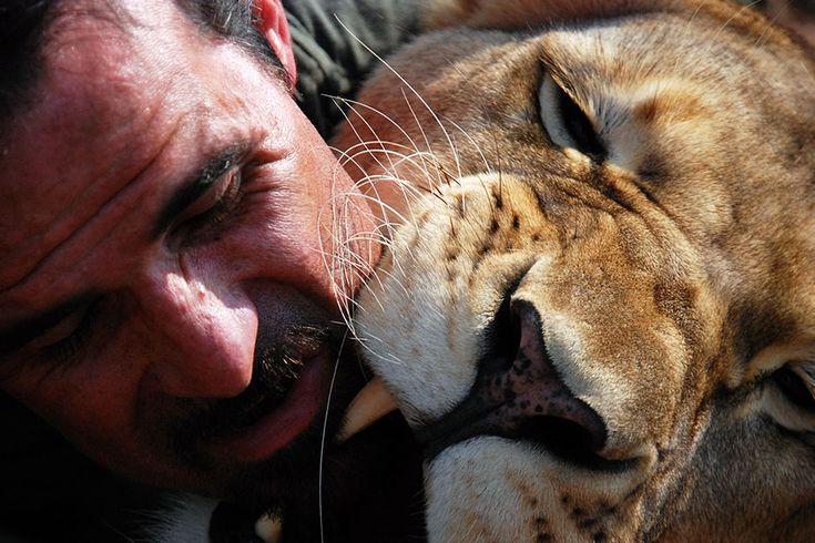 * Kevin Richardson et un lion. Cette image est extraite de The Lion Whisperer.