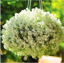 Rare Dolce Alyssum Semi Bianco Semi lobularia maritima Semi di Fiori Cinese…