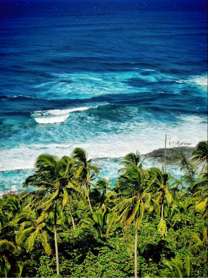 Palm Trees and Surf! Beautiful Hawaii! Make sure to fly with Blue Hawaiian Helicopters on your next visit! www.bluehawaiian.com