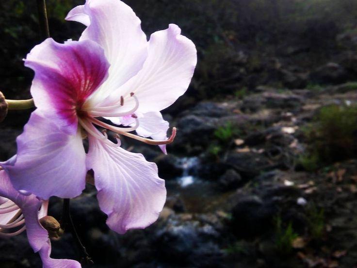 A beautiful pink flower besides lower ghaghari waterfall ...