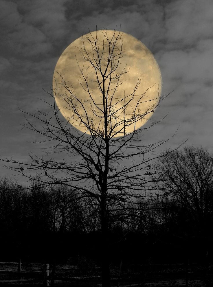 Harvest Moon | Flickr - Photo Sharing!