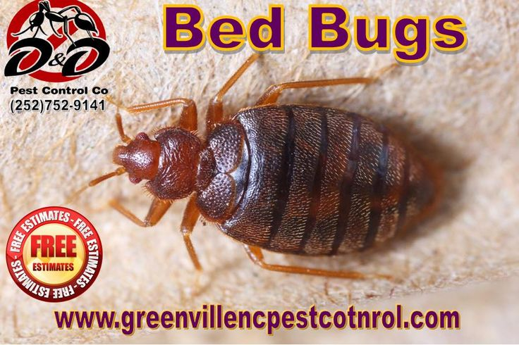 Got bed bugs - call (252)531-0621 for a free estimate - Greenville, NC 27858