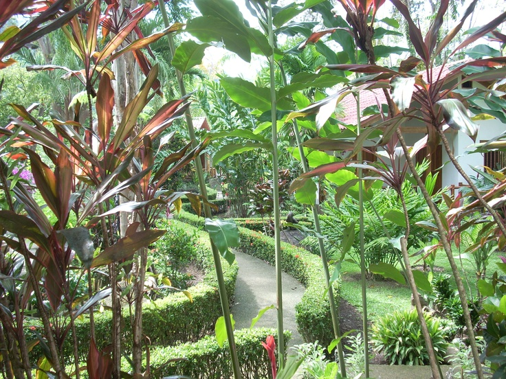 Gardens - Hotel La Palapa Ecolodge Resort
