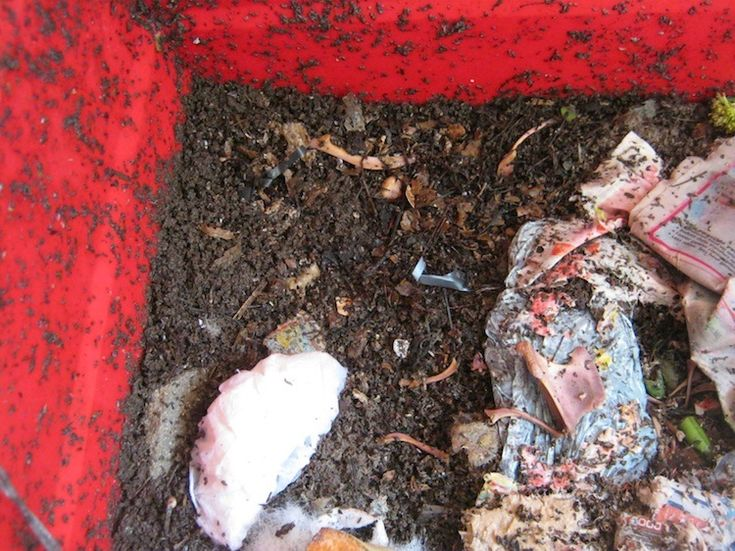Feeding snails to worms is a good way to fatten worms and protect home grown vegetables...