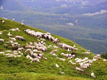 Sardegna natura e.. pascoli incontaminati