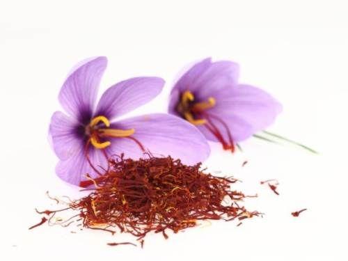 Șofranul este un condiment derivat din floarea de Crocus sativus, care face parte din familia iridaceaelor. Misterul învăluie originea cuvântului englezesc