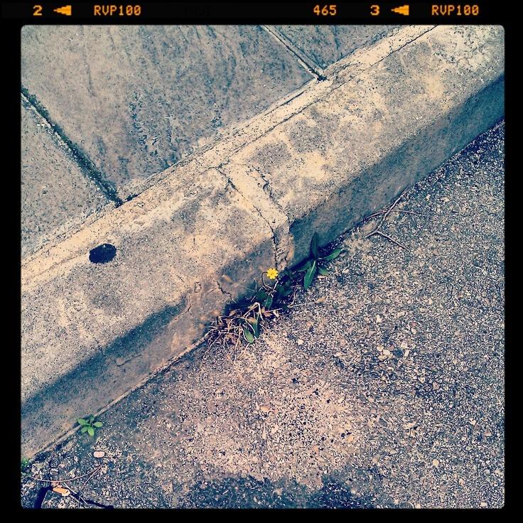 rompiendo el cemento