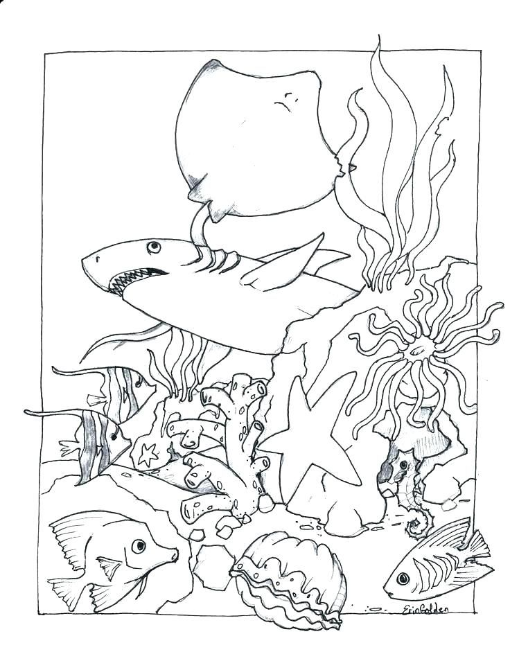 Ocean Coloring Book Ocean Coloring Book Plus Ocean Coloring Book
