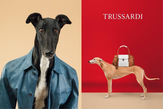 Los galgos fashionistas de William Wegman para Trussardi | SrPerro.com, la guía para animales urbanos.
