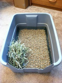 Different cage and litter box ideas for small animals!