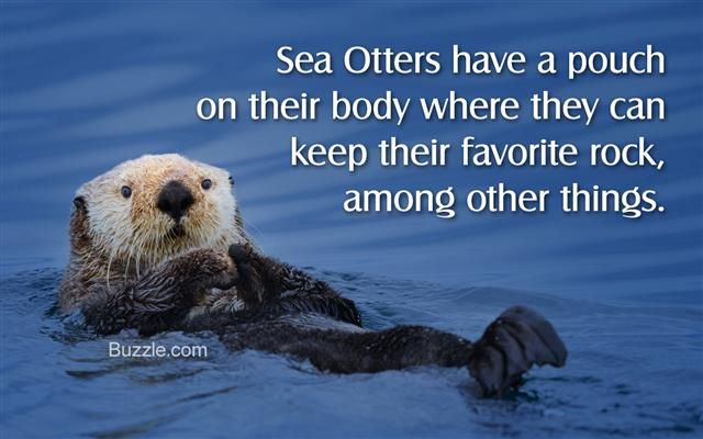 Facts About Sea Otters
