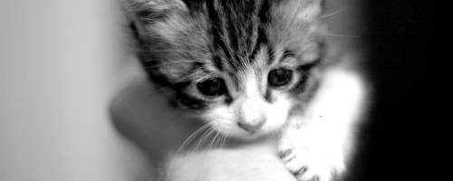 This is a place kitten with size 500 X 200