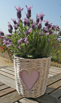 lavender in wicker basket