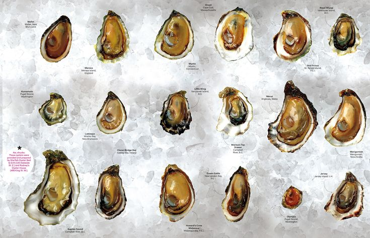 The oyster world
