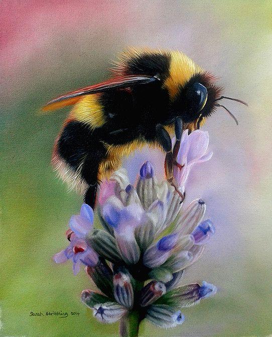 16- Tiere gemalt von Sarah Stribbling