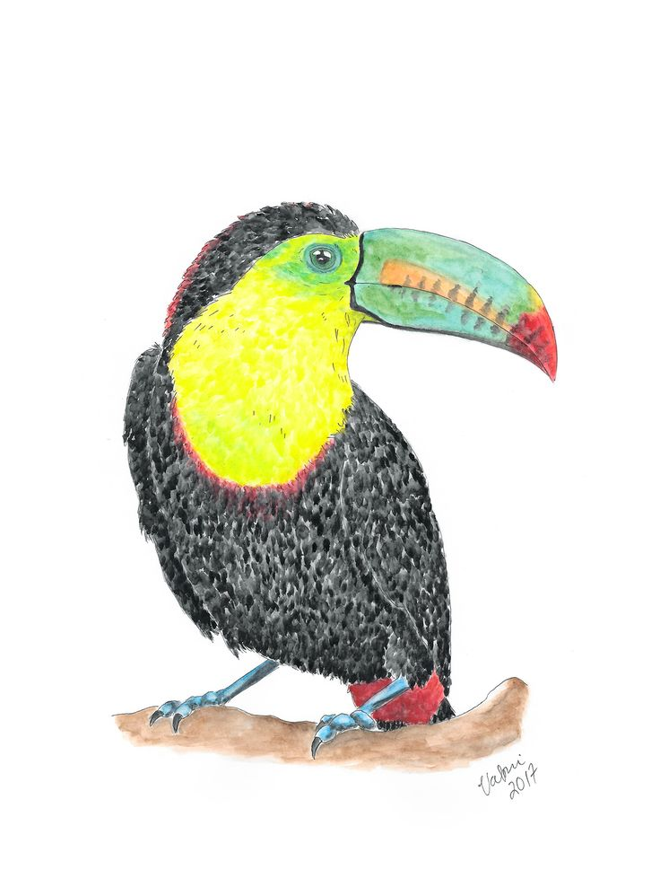 Toucan aquarelle. Tools used Winsor & Newton watercolors and Staedtler pigment liners