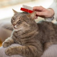 Homemade dry shampoo for cats, diy cat shampoo - Tap the link now to see all of our cool cat collections!