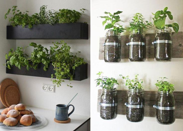 plantes-aromatiques