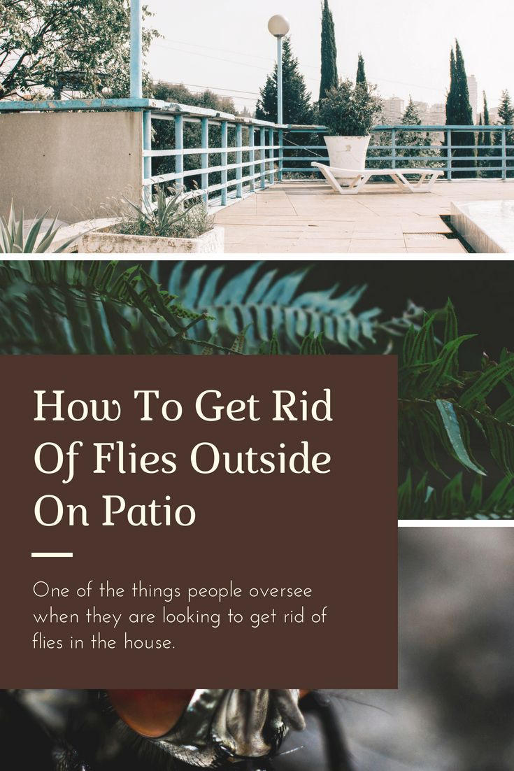 How To Get Rid Of Flies Outside On Patio   Flies outside ...