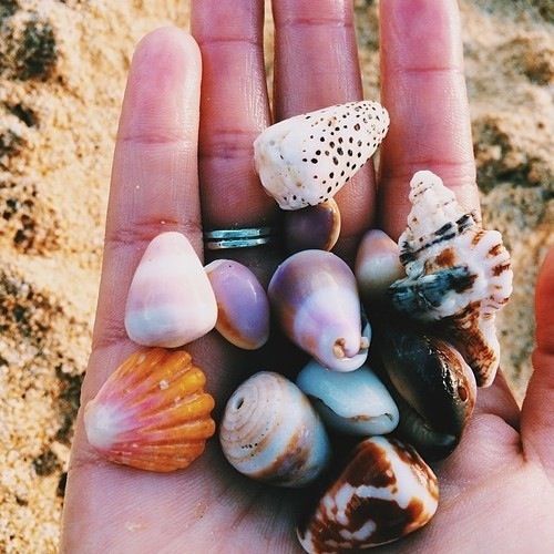 shells are so prettyyyy remember when you were younger and in awe of the sound they make when you hold them to your ear | pinterest @nairobey