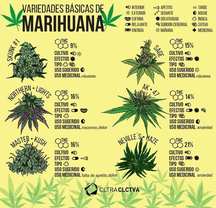 Mitos de la marihuana que no tienen nada de fundamento