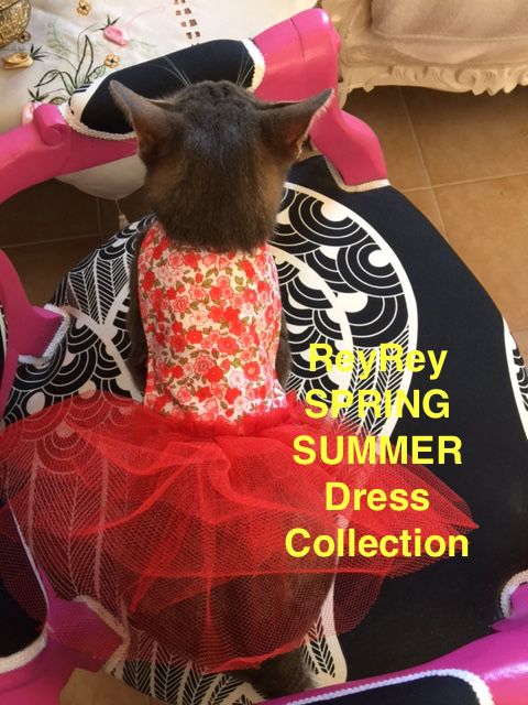 Spring Summer Dress Collection 2015 Designed and Handmade by ReyRey  Pet Supplies