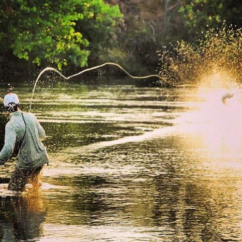 Woah. @tourettefishing hooks up to a tigerfish. #amberjack #amberjack outfitters http://ift.tt/1BaeeV6 - To book your next fishing adventure visit https://amberjack.com.
