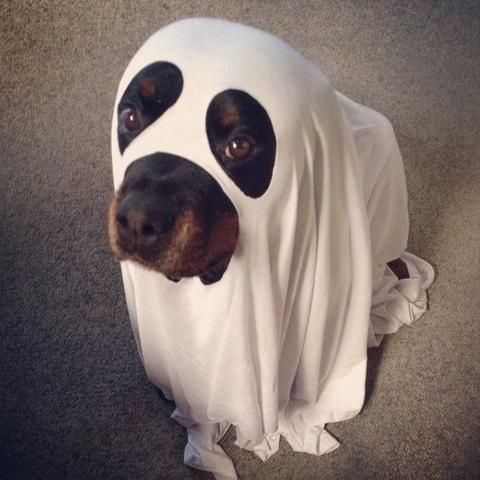rottweiler halloween costumes some of the greatest pet costumes ever - Dog Halloween Ideas