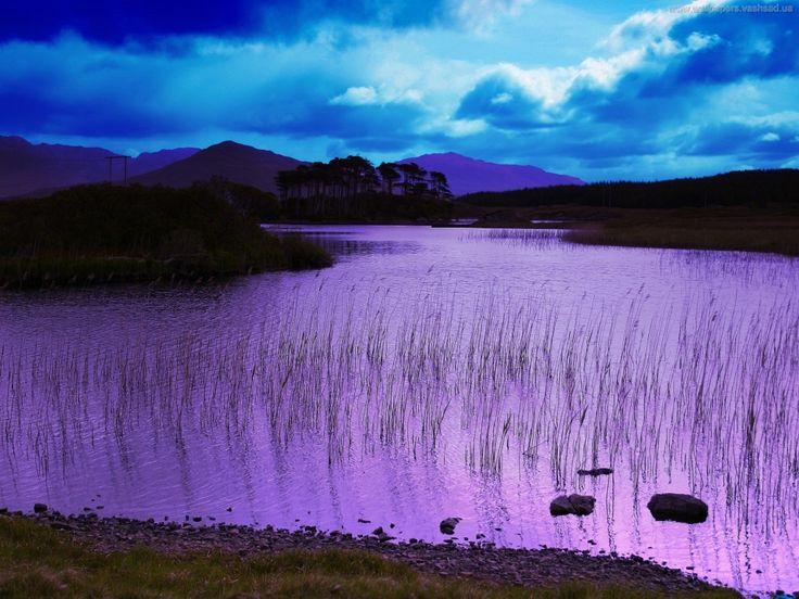 заставки для мобильных телефонов - Deep purple: http://wallpapic.ru/nature/deep-purple/wallpaper-897