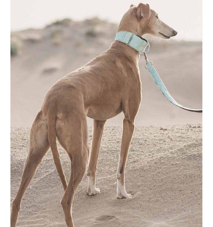 Collar para perro Brott textura Formentera