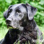 Von Zipperlein bis Schmerz – Arthrose beim Hund