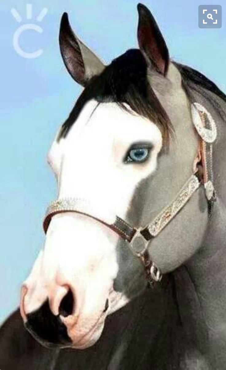best images about horses arabian horses white 17 best images about horses arabian horses white horses and appaloosa horses