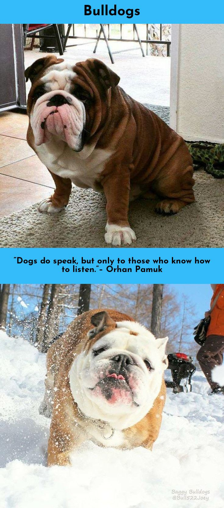 Find Out About Bulldogs Simply Click Here For More Info Bulldog