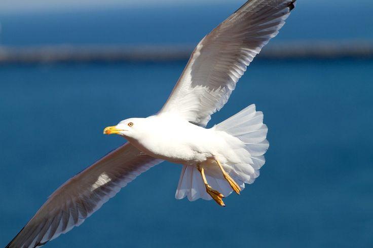 Hoe leuk het ook is voor kinderen en volwassenen, het voederen van vogels is verboden.