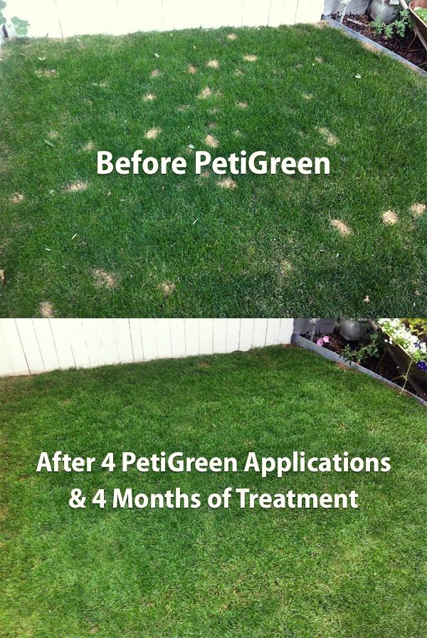 Best Way To Stop Dog Urine From Killing Grass