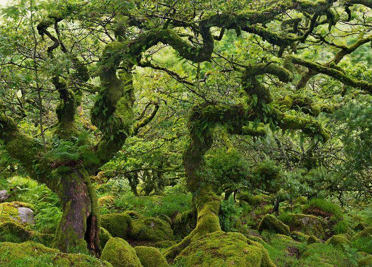Wistman's Wood, Dartmoor, England by Adam Burton