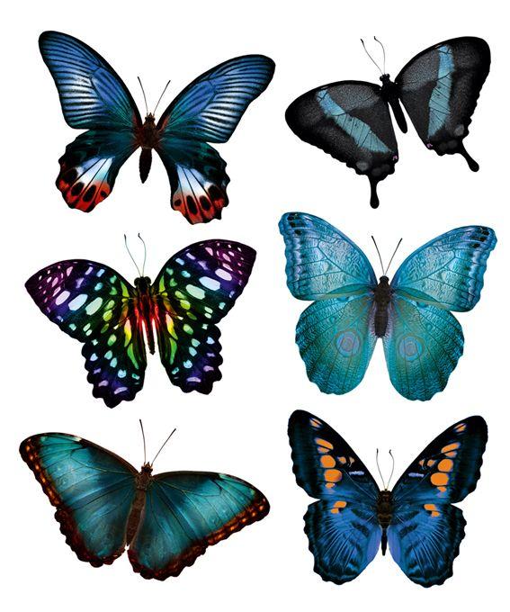 "Наклейки для стен ""Бабочки голубая симфония"" http://decoretto.ru/babochki-dekor-sten-babochkami/babochki-golubaya-simfoniya/"