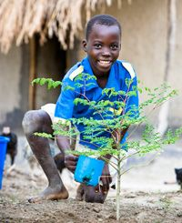 Become Ambassador of the Miracle Tree - Give Moringa seeds!   Combat climate change, desertification, malnutrition, food shortages and help families and communities getting purified water with the Moringa Tree. http://miracletrees.org/moringa_seeds.html