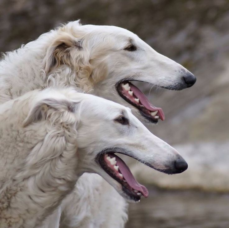 Kiryl & Masha
