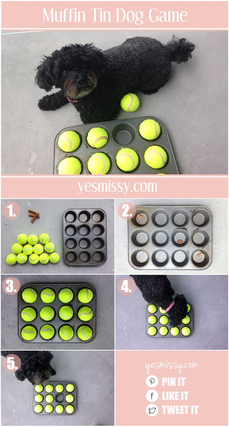 Your dog will love this muffin tin treat game!