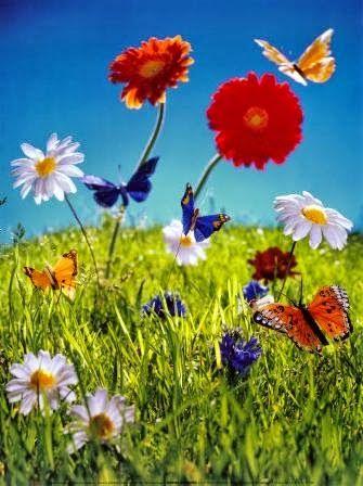Olhando só para o chão, percebeu, apenas, o movimento das sombras sem cor.  Sem coragem de olhar para o céu, deixou de ver o voo azul das borboletas. -Adélia Maria Woellner-