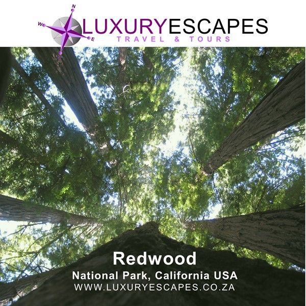Todays #AmazingPlace is Redwood National Park, California USA home to the tallest trees on Earth. The parks also protect vast prairies, oak woodlands, wild riverways, and nearly 40 miles of rugged coastline. Go explore! www.luxuryescapes.co.za