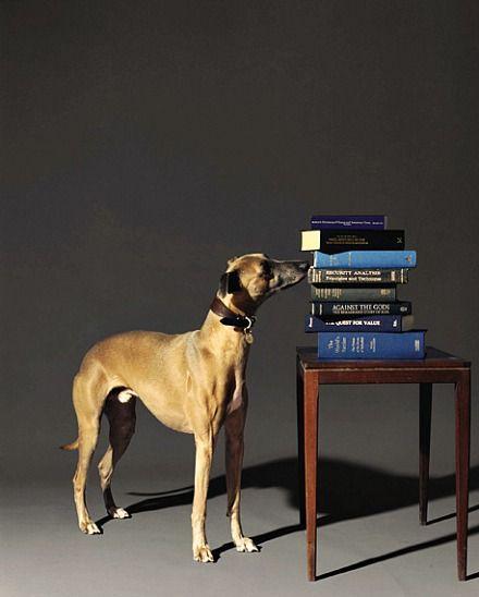 Olivier Richon  Financial Still Life (with Dog)  2003