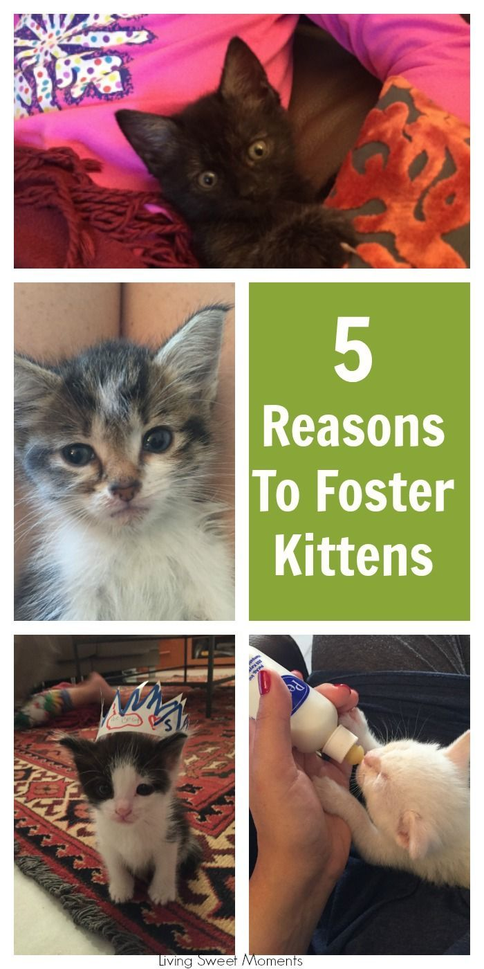 I Hope Youve Found Enough Reasons To Foster Kittens And If You Have Tell Me About Your Experience I Was Selected For This Op In 2020 Foster Kittens Kittens Kitten Care
