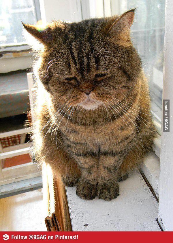 Highly depressed cat