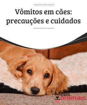 Vômitos em cães: precauções e cuidados #Vômitos em #cães são muito comuns, mas é importante tomar uma série de #medidas para que eles cessem. Podem não ser nada ou podem ser um #sintoma de algo sério. #Saúde