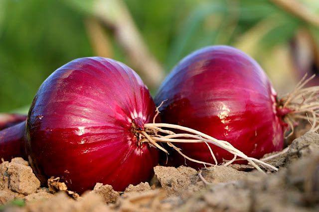 Onion Benefits: Top 10 Health Benefits of Onions   Onions - aromatic it is used as the basis for many food recipes and helps you reach your true potential taste. But be careful when cooking the onion: many nutrients are in the outer layers and can be lost if cooked onion. Do not be afraid of crying when you cut the onion. With the right techniques you can get a chopped onion shed a tear.  Prevents Diabetes:A single serving of onion contains 27% of its biotin DRI. Biotin has many positive…