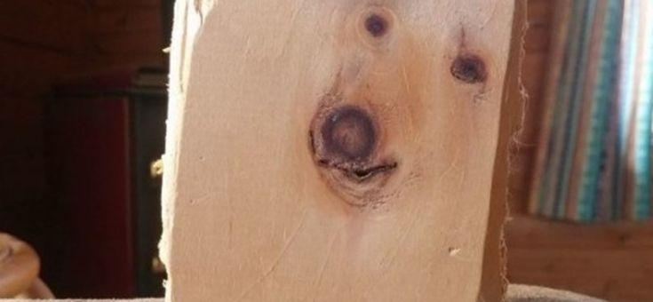 Élet+Stílus: A fába szorult kutyalélek - HVG.hu
