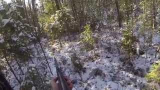 Смотреть онлайн видео На медведя с Западно-Сибирской лайкой